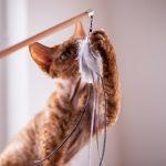 @ wędka crazy cats