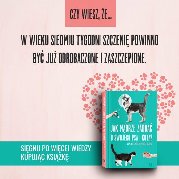 Jak mądrze zadbać o swojego psa i kota, Magda Firlej-Oliwa (5)
