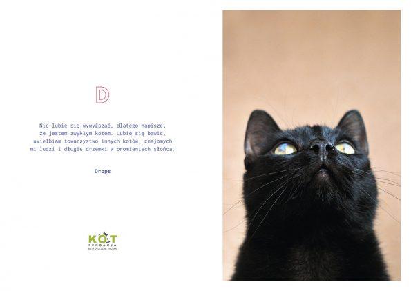 kotes, notes dla kociarza (11)