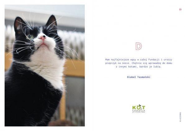 kotes, notes dla kociarza (4)