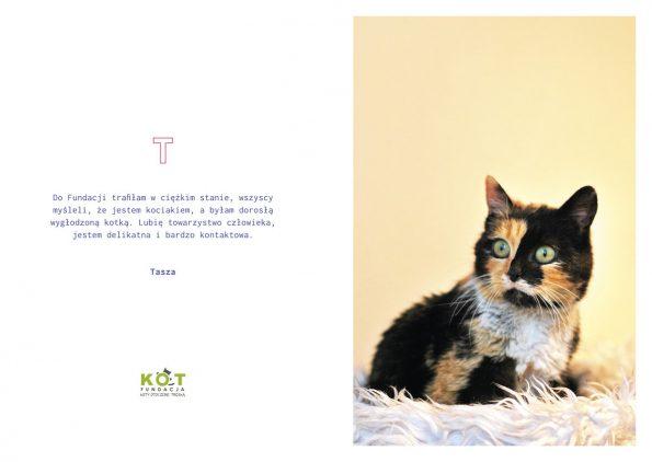 kotes, notes dla kociarza (6)