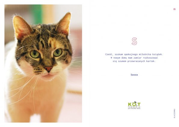 kotes, notes dla kociarza (8)