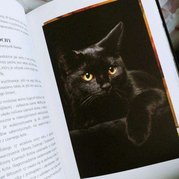 Magia kotów, Barbara Sieradzan (3)