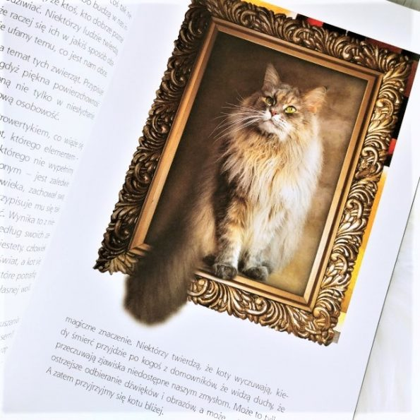 Magia kotów, Barbara Sieradzan (4)