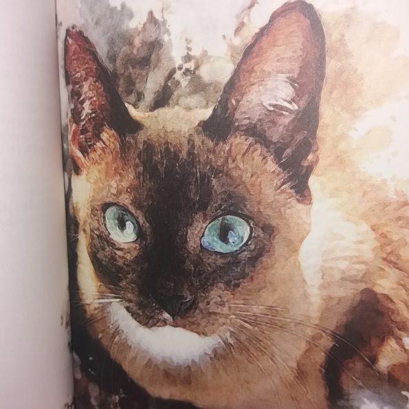 Najpiękniejsze wiersze o kotach, Franciszek J. Klimek (1)