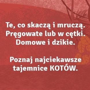 Sekretne życie kotów, Andrzej Kruszewicz, Agnieszka Czujkowska (3) — kopia