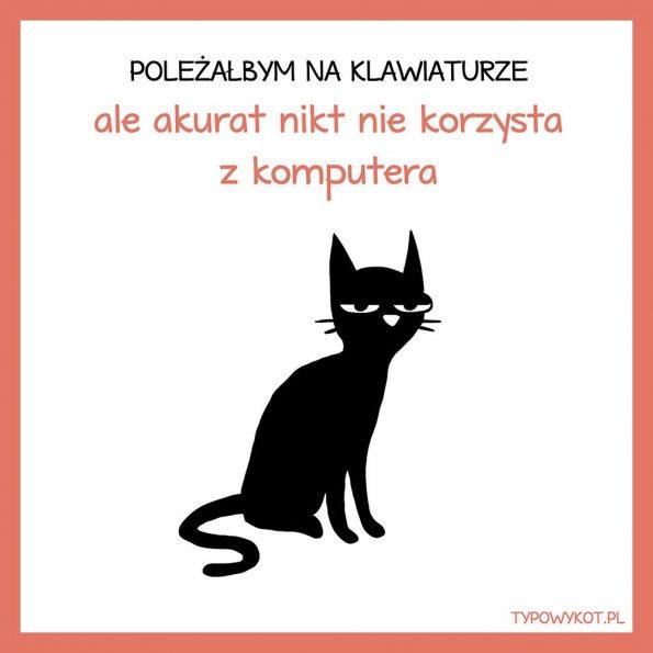Typowy kot (4)
