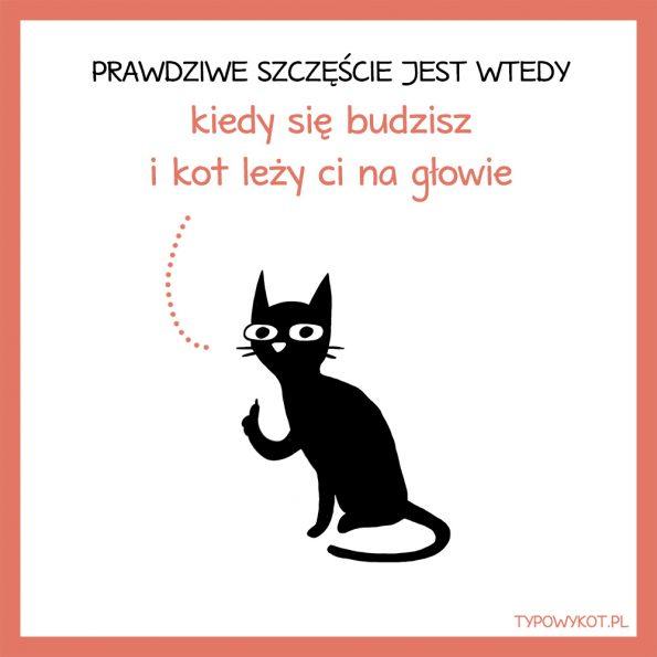 Typowy kot (6)