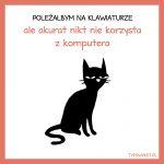 Typowy kot (1)