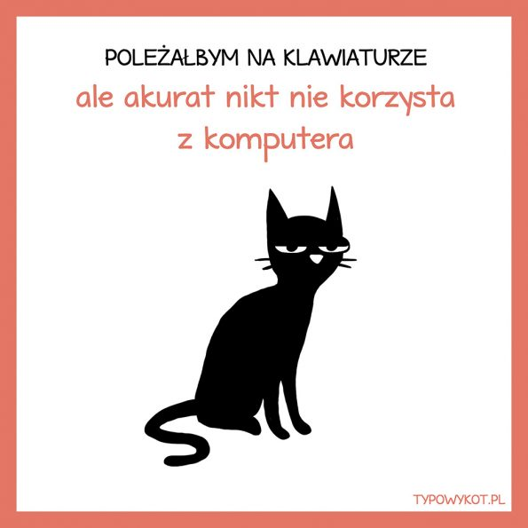 Typowy kot (8)